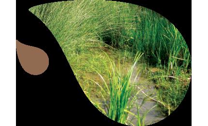 Les eaux pluviales constituent une ressource et un support d'aménagements.